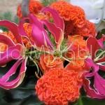 Addobbi floreali con rose, celosie arancio e gloriose fucsia