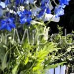 Raffinato addobbo ricevimento con delphinium blu