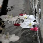 la leggerezza dell'acqua e dei phalaenopsis
